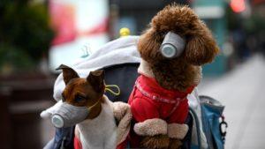 Canine Covid-19: Can Dogs Get Coronavirus?