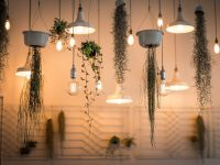 5 Hanging Plants That'll Make Your Home Look Amazing