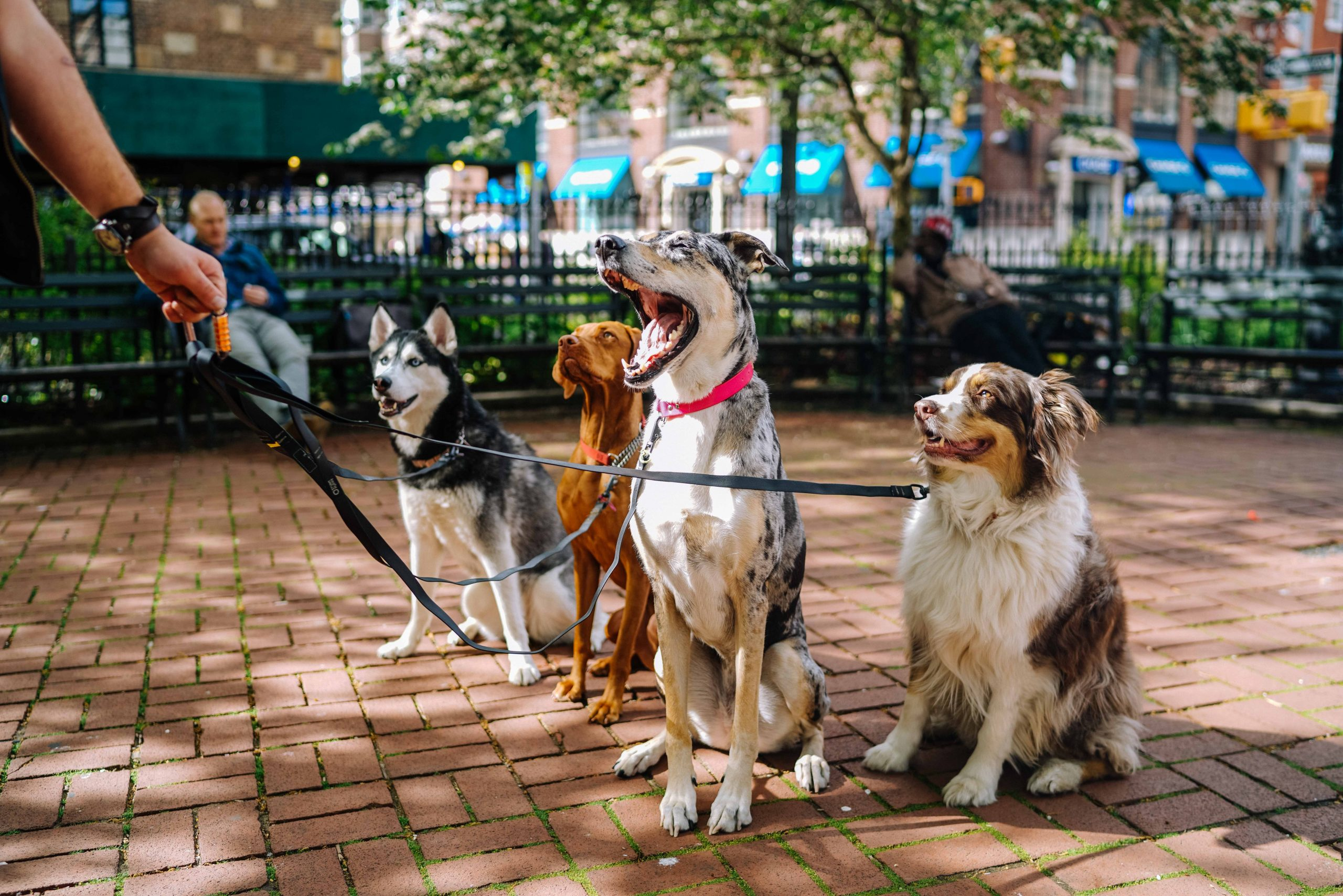 4 Types of Most Unique and Rare Dog Breeds
