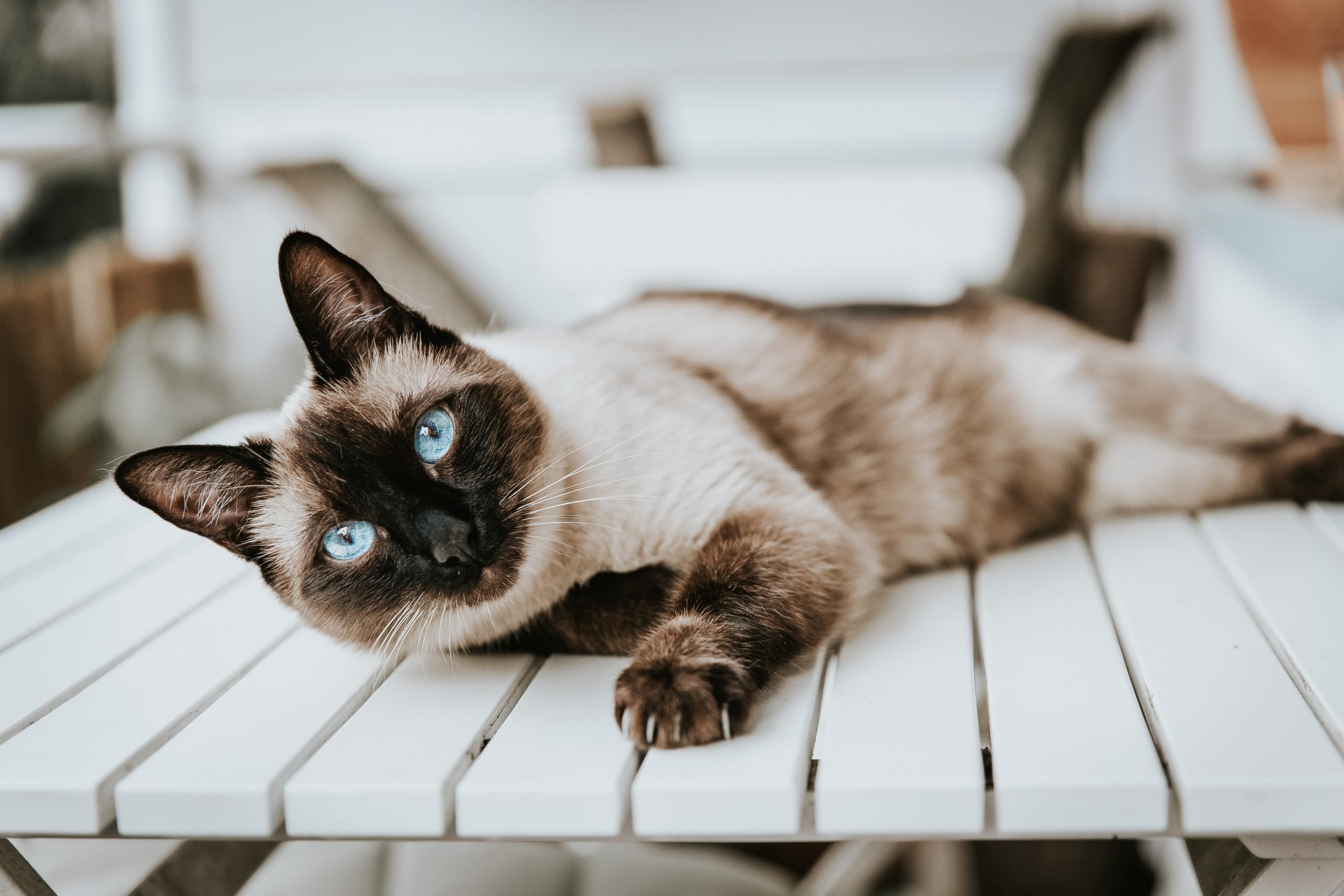 DIY Cat Toys: 3 Best Ways to Make One
